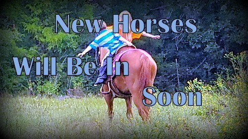 New Horses Will Be In