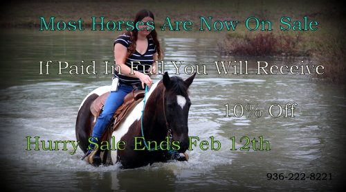 Sale On Most Horses