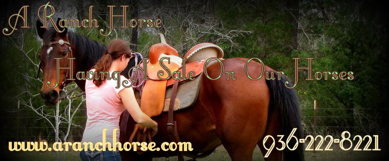 Horses Are Now On Sale