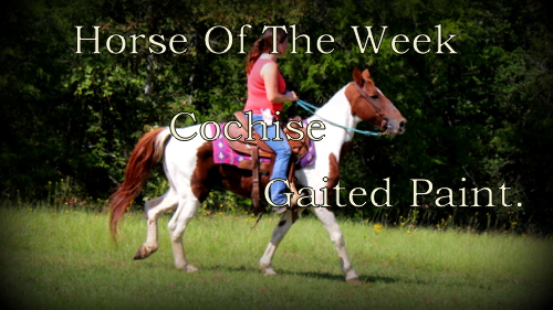 Horse Of The Week